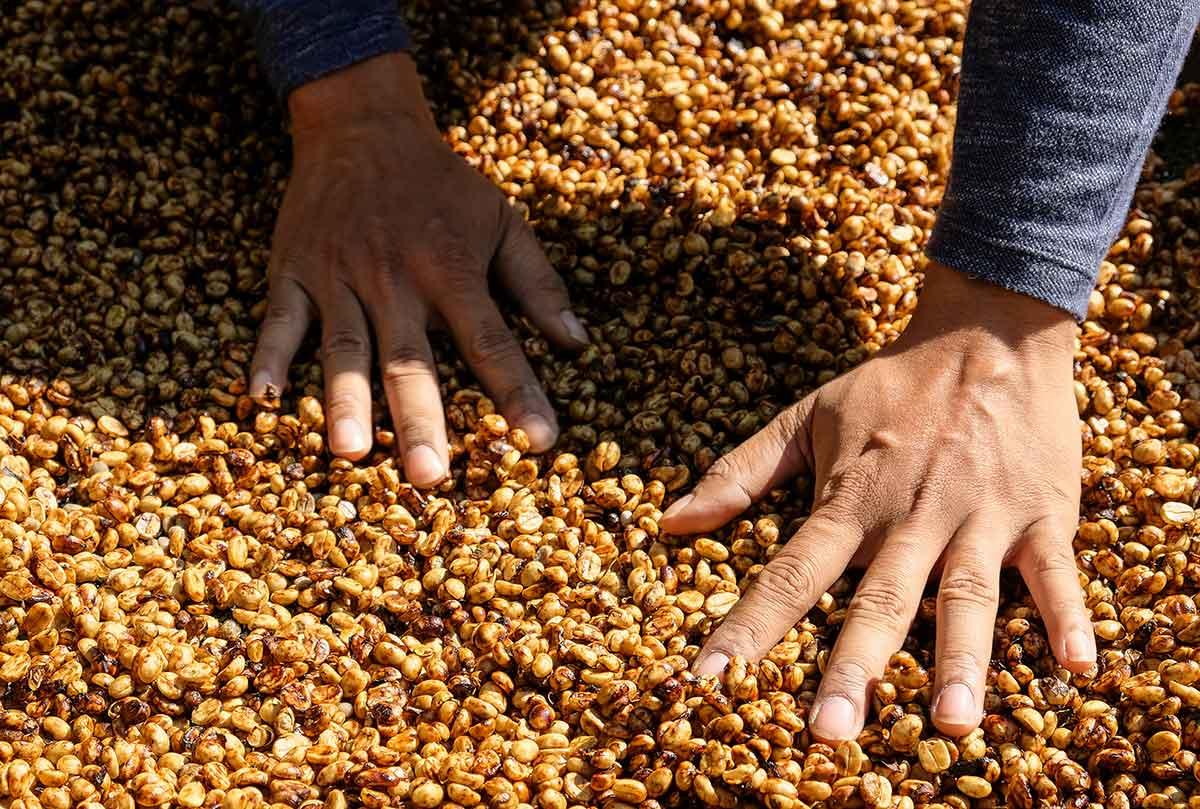 Comment est fabriqué le café